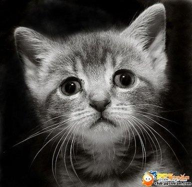动物 灵长目 猫 猫咪